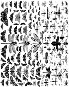 834178 © Free On French Variety of Insects
