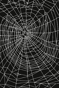 774889 © Free On French Spider Web Pattern