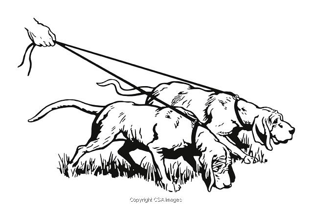 Two Animals Illustrations